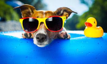 Arrivano assicurazioni per cani e gatti in vacanza